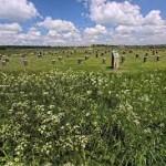 Wiltshire 1